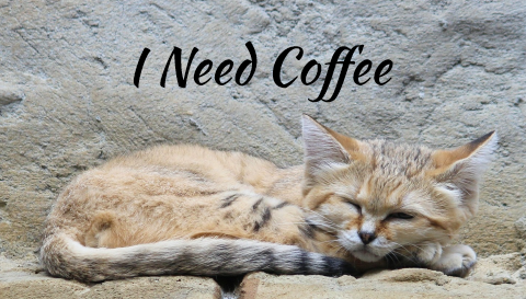 coffee kitty