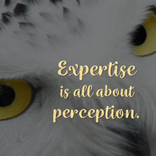 Expertise is all about perception