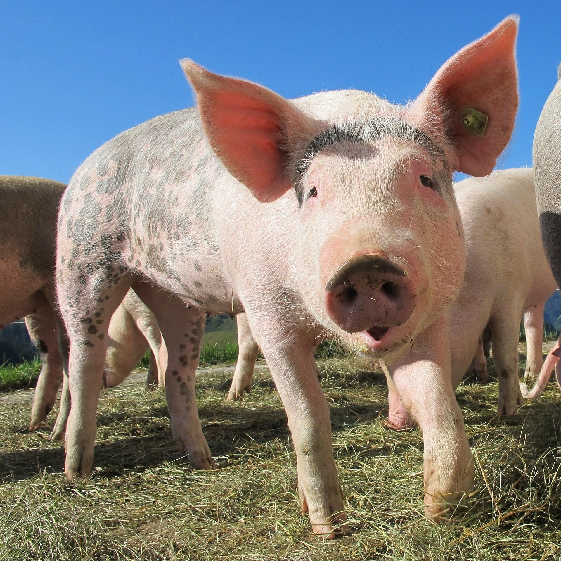 Avoid the PIG of instant gratification