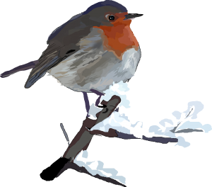 A resident Robin singing regardless of who listens